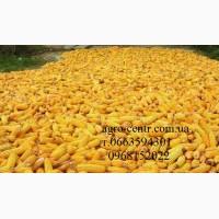 Семена кукурузы Монсанто, Вниис, Маис