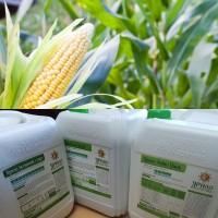 Комплексне удобрення на кукурудзу