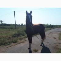 Продам лошадь с седлом