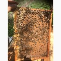 Продам бджолопакети карпатської породи бджіл 200шт