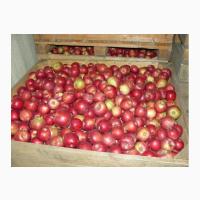 Купим яблоки для переработки в Украине