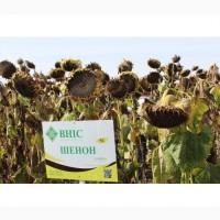 Купити насіння соняшника (посівний матеріал) Шенон, ВНІС