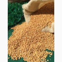 Услуги по очистке семян на фотосепараторе, калибровка и фасовка