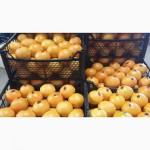 Апельсин из Турции FCA Мерсин