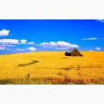 Купим зерно Пшеницы.Самовывоз
