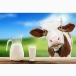 Куплю оптом коровяче молоко