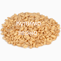 Закуповую зерно пшениці