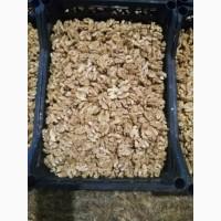 NutStar Export Company (Walnut)