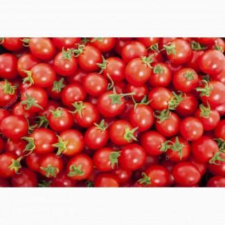 Продам томат розовый оптом