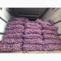 Картофель продовольственный крупным оптом ! Хозяйство продаст картошку оптом от 5 тонн