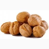 Куплю орех грецкий
