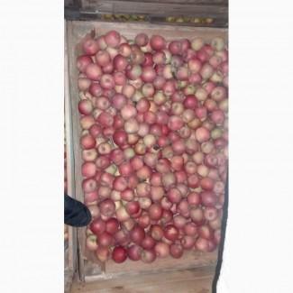 Продам яблука з холодильника(фрешовані)