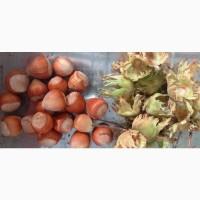 Фундук сорта Косфорд та Галле врожай 2020р. 120грн/кг