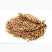 Пшеничные отруби от производителя куплю Харьков