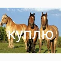 Куплю коней лошадей на мясо