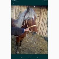 Продам коня Торійця