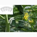 Пластиковий гроноутримувач для підтримки плодів томата