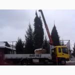 Посадка больших деревьев