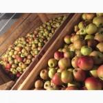 УкрЗаготКомпани закупает яблоко на переработку