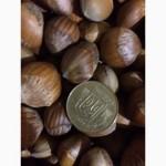 Продам фундук, лесной орех