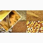 Куплю зерновые любого качества (оптом)