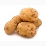 Продається насіннєва картопля (Хмельницький)