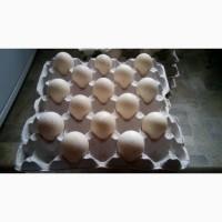 Продам инкубационные яица индюшат