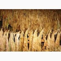 Куплю листовой табак