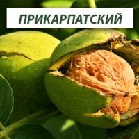 Сортовые саженцы ореха, фундука и плодовых из питомника