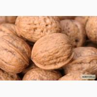 Продам грецкий орех кругляк урожай 2018
