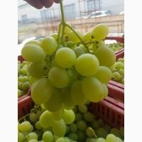 Виноград из Италии оптом от производителя сезон 2018/2019