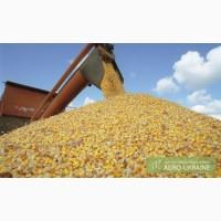 Закупаем фуражное зерно по хорошей цене опт