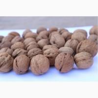 Продам грецкий орех в скорлупе калиброванный
