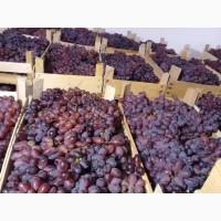 Продам виноград Шоколадный
