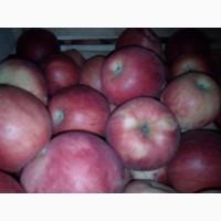 Яблука продам оптом і врозь