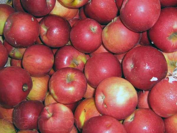 Фото 2. Продам яблоки