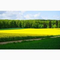 Закуповуємо насіння олійну, олійні, працюємо по всій Україні