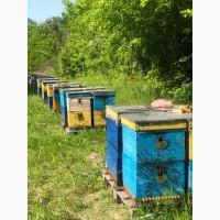 Бджолопакети карпатка 2021 Пчелопакеты
