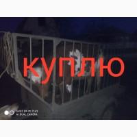 Куплю бычков на откорм от 150-250 кг по запорожской Донецкой области