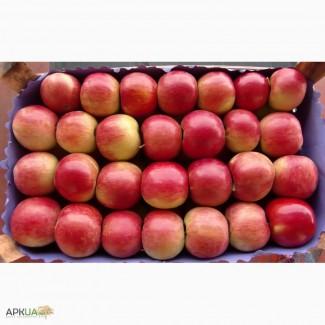 Продам яблоки Айдаред. + много других сортов. много