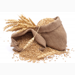 Закупаем зерновые культуры любого качества__