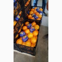 Апельсины, лимоны, мандарины_ ОПТ от производителя из Турции