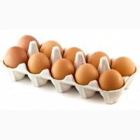 Яйцо инкубационное куриное, яйце інкубаційне