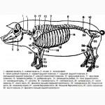 Кістки свинячі. Трубчасті, хребтові