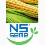 Семена кукурузы Новый Сад различных гибридов