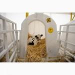 Индивидуальный домик теленка