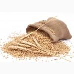 3акупаем зерновых культур (кукурузы, подсолнечника, пшеницы, ячменя и др.) любого качества