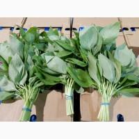 Продаем базилик зеленый оптом, мелким оптом