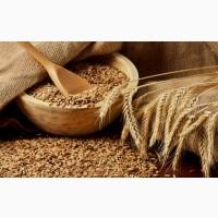 Куплю пшеницу фуражную. Луганск и область