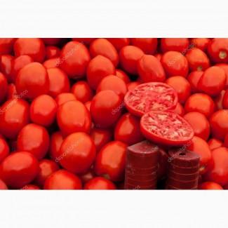 Заключим договор на поставку помидоров оптом